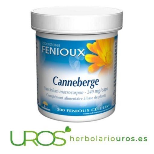 Arándano Rojo - una ayuda natural para cistitis - Arándano rojo de Fenioux representa una ayuda natural para el cistitis e infecciones urinarias.