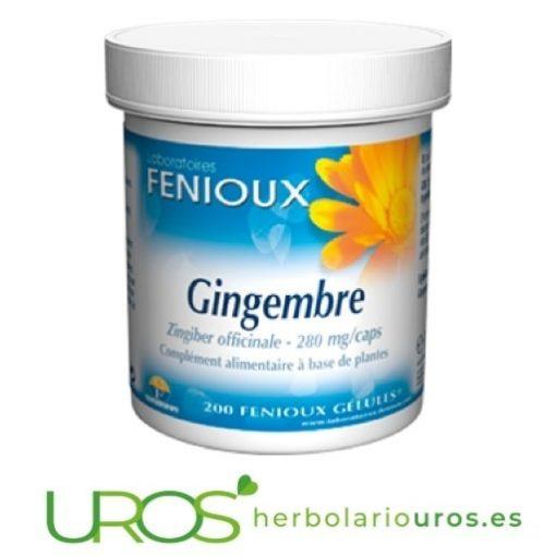 Jengibre puro en cápsulas de Fenioux : 200 cápsulas Jengibre para qué sirve - Jengibre puro en cápsulas de lab. Fenioux ¿Jengibre qué propiedades tiene? Descubre todos sus beneficios naturales
