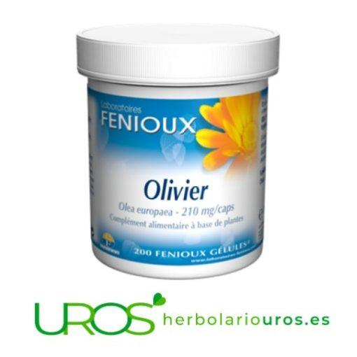 Olivo de Fenioux: una ayuda natural para bajar la tensión alta - olivo en cápsulas - hipertensión controlada naturalmente Olivo de Fenioux en cápsulas para regular tu presión sanguínea Para regular naturalmente la presión sanguínea elevada con este remedio en cápsulas
