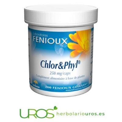 Chlor & Phyl Fenioux: Clorella pura en cápsulas con clorofia Chlor & Phyl de Fenioux - clorella pura con clorofila en cápsulas Un remedio natural que aporta energía a base de chlorella, clorofila, ortiga y avena