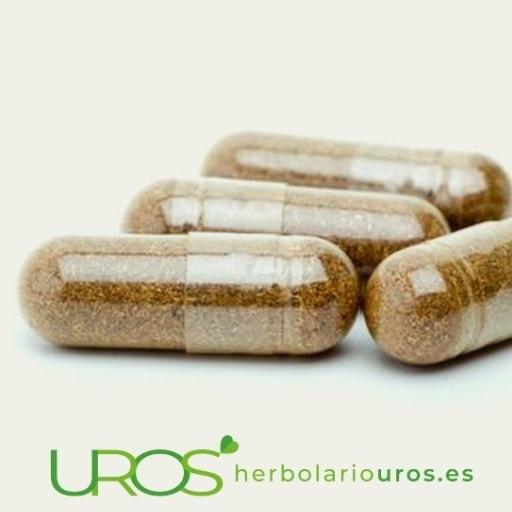 Suplementos naturales - ¿Cómo funcionan los remedios naturales?