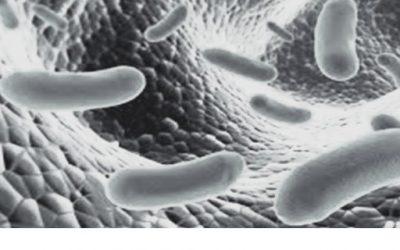 Gasseri: Lactobacillus Gasseri