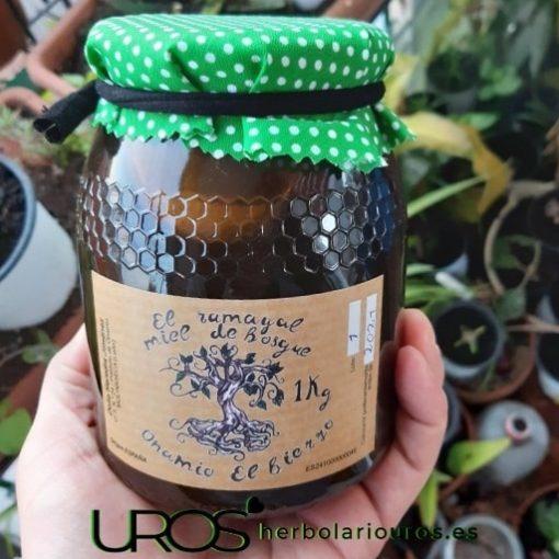 Miel cruda de montaña: Comprar miel pura del Bierzo