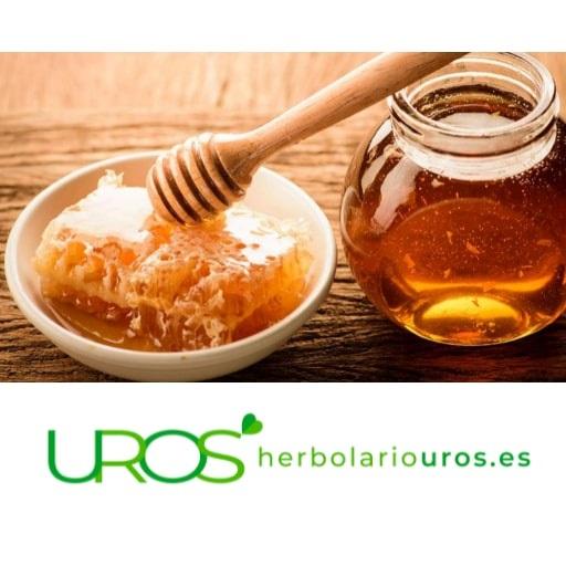 ¿Cómo conocer una buena miel? Descubre todos los trucos