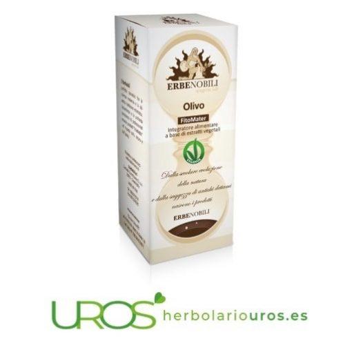 Olivo en tintura - olivo en líquido como remedio espagírico de Erbenobili para hipertensión