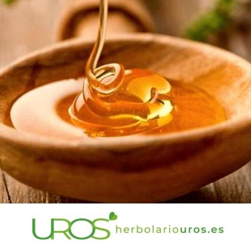 Propiedades de la miel cruda natural de abeja ¿Qué propiedades tiene la miel natural pura de abeja?