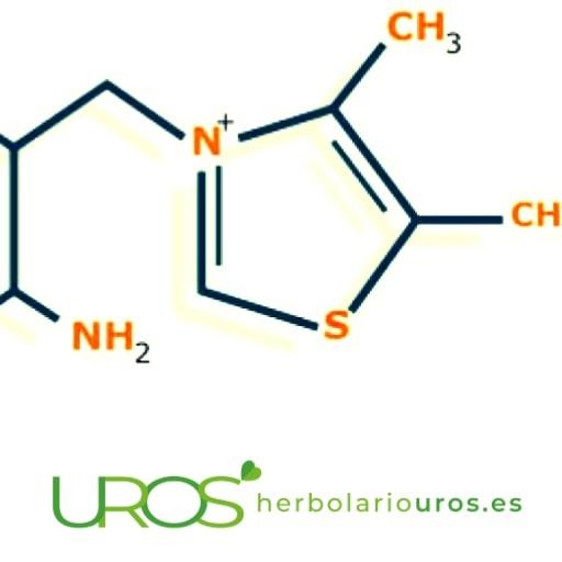 Falta de vitamina B12 y los remedios nautrales ¿Cómo evitar la falta de vitamina B12?