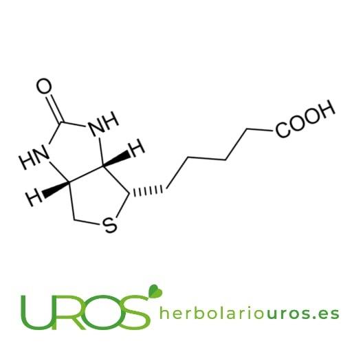 Biotina en alimentos Alimentos ricos en Biotina (Vitamina B8) - dónde encontrar las más altas concentraciones