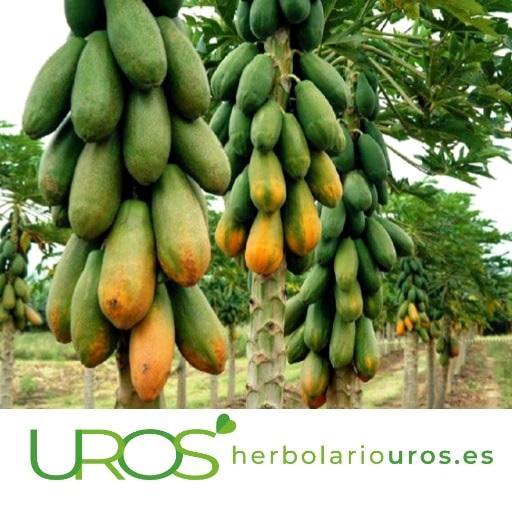 ¿Papaya qué beneficios tiene? Todas las propiedades del fruto de la papaya