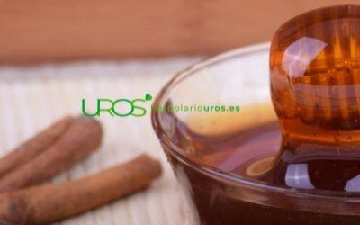 La miel con canela – beneficios para tu buena salud respiratoria y más
