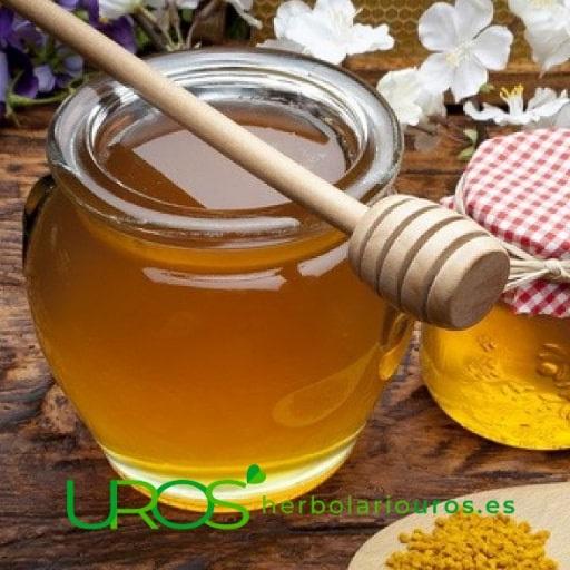 Miel beneficios – ventajas de tomar la miel