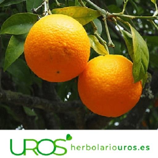 ¿Cuál es la mejor forma de vitamina C?